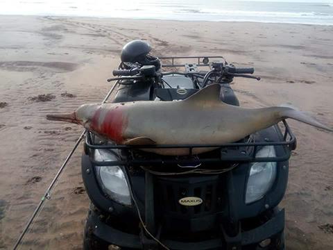"""El hombre que pescó un delfín en Marisol se mostró """"indignado"""" por el escrache y explicó lo sucedido"""