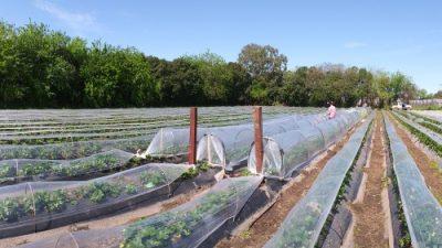 Estudian un nuevo diseño de microtúneles en cultivos hortícolas que disminuyen 40% el trabajo y genera menor impacto ambiental