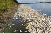 Provincia advierte que por la ola de calor puede haber mortandad de peces en algunas lagunas