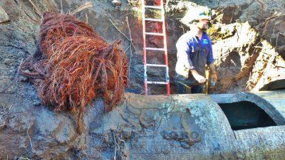 ¡Increíble! ABSA extrajo 1.200 kilos de raíces del acueducto entre 9 de julio y Carlos Casares