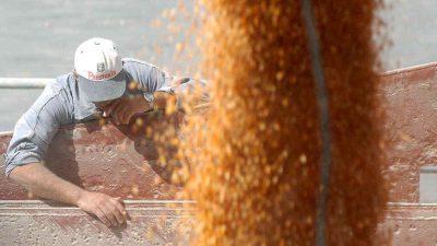 AFIP: Los productores deben cargar sus datos en SISA este mes para la cosecha gruesa