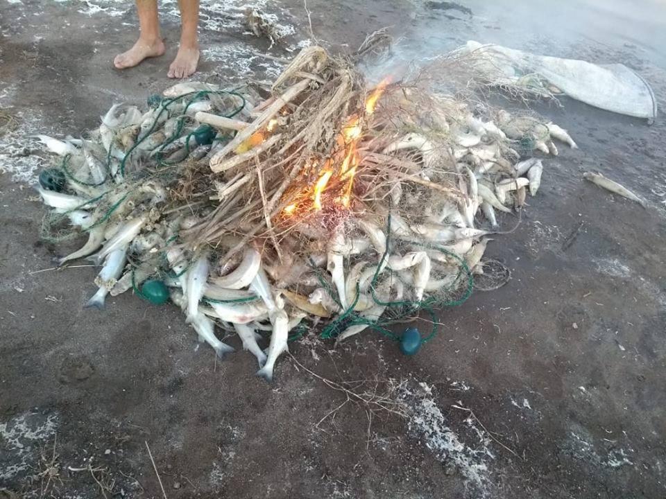 Secuestran 650 metros de red con 200 kilos de pejerrey en la laguna Hinojo Chico
