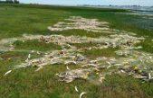 Secuestraron una red de mil metros con 700 kilos de pescado en una laguna de Lincoln