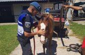 En La Plata rescatan una yegua preñada y son 73 los caballos recuperados de la tracción a sangre