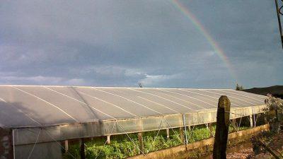 La Plata / El Banco Provincia y el municipio lanzan línea de créditos para hoticultores afectados por las tormentas