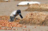 AFIP levantó los controles y se destrabó el conflicto que amenazaba la cosecha de cebolla en Villarino