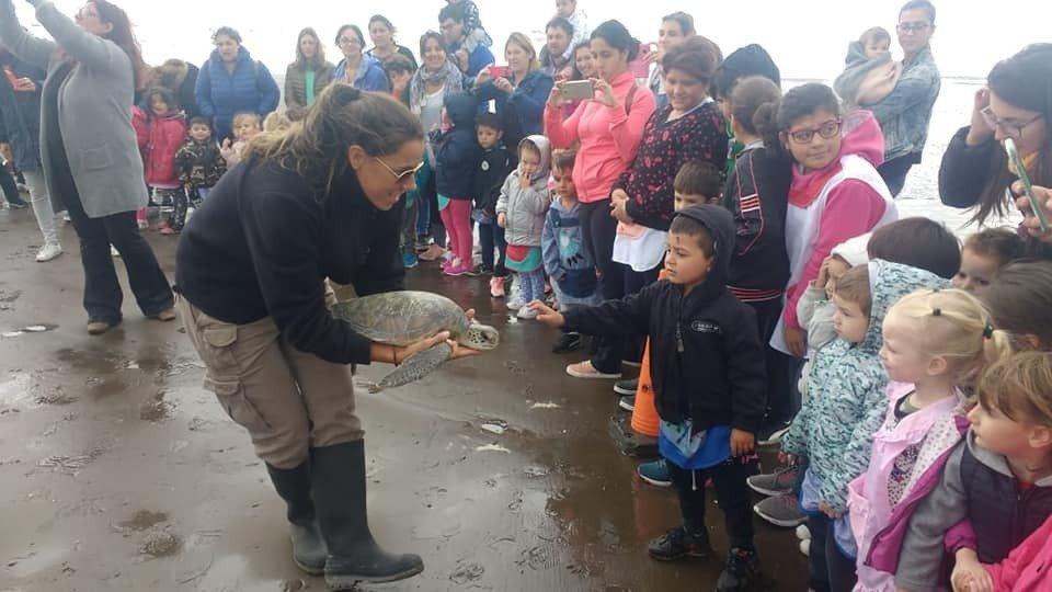 Video / La emocionante liberación de una tortuga verde en Monte Hermoso
