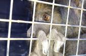Denunciá el tráfico ilegal de fauna silvestre en la provincia
