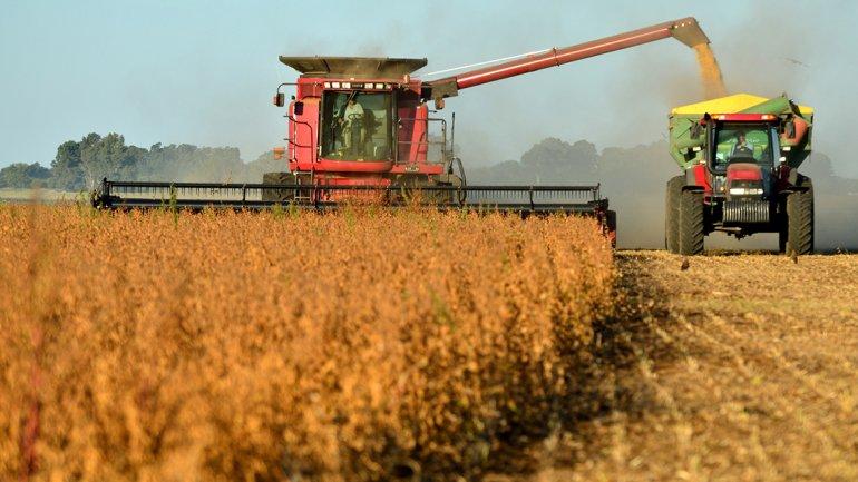 Provincia calcula una cosecha gruesa de 34,4 millones de toneladas e ingresos por 6.500 millones de dólares