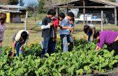 La coordinadora del programa ProHuerta aseguró que por la crisis crecen las huertas domiciliarias y comunitarias