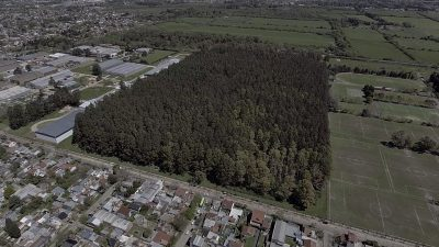 Chiche Duhalde busca impedir que talen miles de árboles en el Pulmón Verde de Llavallol