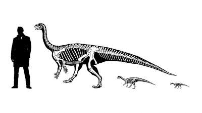 Revelan el gateo de una dinosaurio patagónico bebé por imágenes 3D