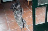 Cañuelas / Fueron a protestar al Consejo Escolar y dejaron una rata muerta colgada en la puerta