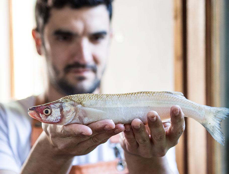 """Un cocinero busca instalar al pejerrey como """"plato típico"""" de la gastronomía bonaerense"""