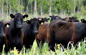 En Provincia el stock bovino alcanzó las 19,1 millones de cabezas, el máximo nivel desde 2009