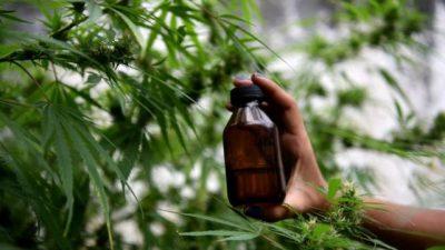 La policía allanó su casa por error y se llevó el cannabis medicinal de su nieto epiléptico
