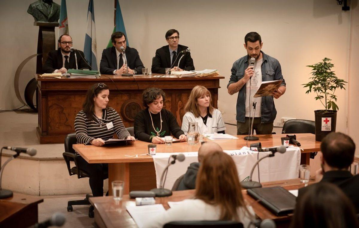 Bahía Blanca / Llevaron una planta de marihuana al Concejo Deliberante para pedir por el derecho a cultivar