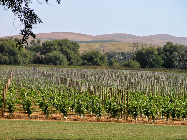 La producción vitivinícola cobra impulso en territorio bonaerense