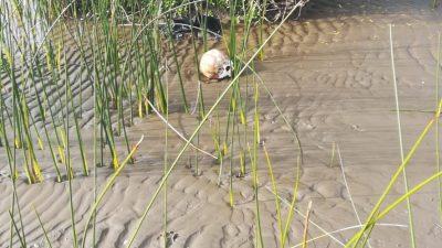 En una playa de Punta Lara aparecieron huesos humanos que serían de un niño