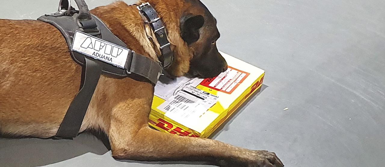 Perros de AFIP detectaron cocaína y éxtasis en libros infantiles