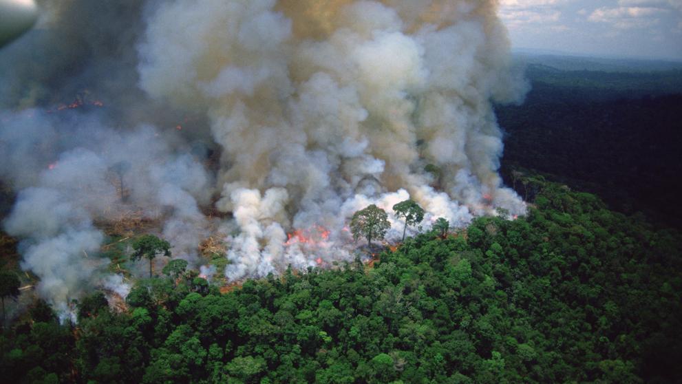 """Incendio en el Amazonas: """"Es una de las mayores catástrofes ambientales de la humanidad"""""""