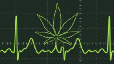 Científicos de La Plata descubrieron que la marihuana mejora la capacidad de contracción del corazón