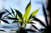 Una clínica de Olavarría trabaja con cannabis medicinal con la ayuda de la Facultad de Ingeniería de la UNICEN