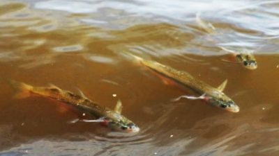 Inicia la veda de pesca de pejerrey en toda la provincia de Buenos Aires