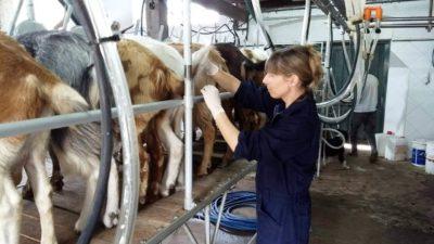 Provincia realiza controles en tambos para mejorar las sanidad de ovinos