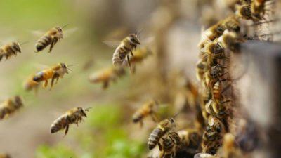 """""""Las abejas se están muriendo por el uso de agroquímicos"""", alertaron desde la Sociedad de Apicultores"""