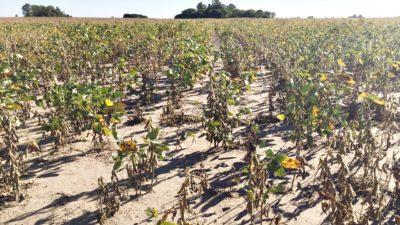 """Por la seca, Provincia declaró la """"Emergencia Agropecuario"""" en doce municipios"""