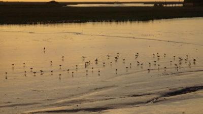 Con un festival de bienvenida, San Clemente del Tuyú recibirá a las aves migratorias