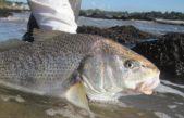 """Se viene el """"Gran Concurso de Pesca a la Corvina Mayor"""" con más de 450 mil pesos en premios"""