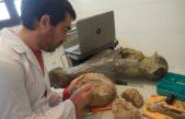 Miramar se refirma como potencia paleontológica con el masivo hallazgo de fósiles del Plioceno