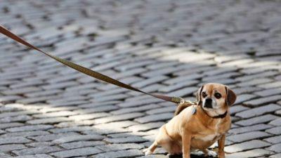 Monte Hermoso se pone firme con el control de perros y gatos en la vía pública