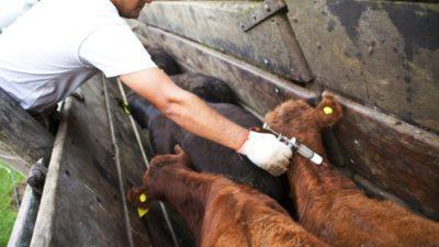 Científicos de la UNLP demostraron que ríos y arroyos están contaminados con antibióticos veterinarios