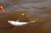 Terminó la veda de pesca del pejerrey en la Provincia