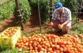 Venden bolsones económicos de verdura en la ciudad de La Plata