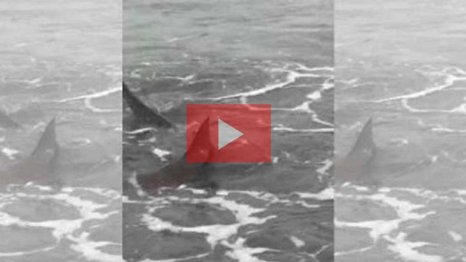 """Tiburones en Monte Hermoso: """"Hay que llevar tranquilidad porque son animales totalmente inofensivos"""""""