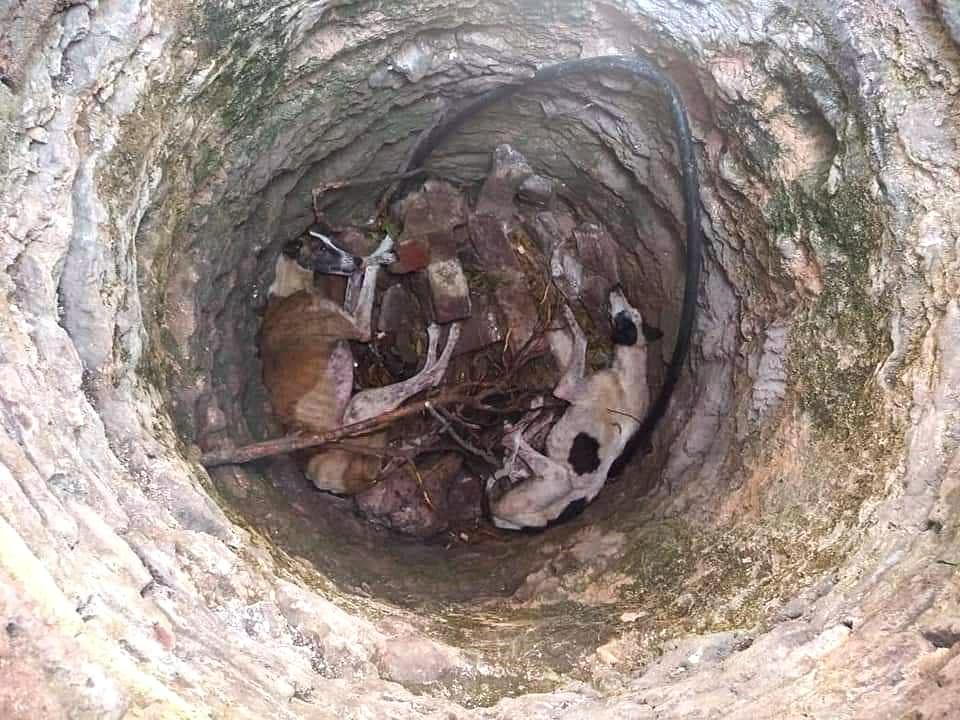 Crueldad animal en Olavarría: rescataron a dos perros galgos que fueron tirados en un aljibe