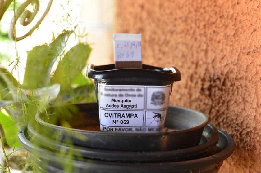 Monte Hermoso libre de dengue: las ovitrampas dieron negativo a aedes aegypti