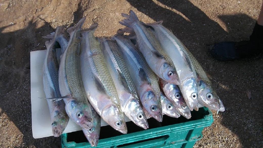 Está abierta la inscripción para la pesca comercial de pejerrey en la única laguna habilitada de la Provincia