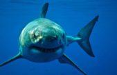 En Miramar hallaron los primeros restos fósiles de un tiburón blanco en la Costa bonaerense
