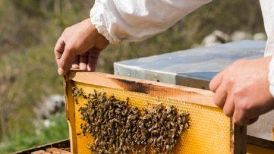 El INTA ofrece un nuevo curso online y gratuito: apicultura para principiantes
