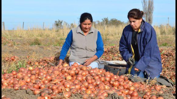 """La cuarentena complica la descolada de la cebolla: """"Hay producción que va a quedar en el campo"""""""
