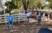 En Saliquelló el intendente permitió una feria ganadera y la gente ¡está que trina!