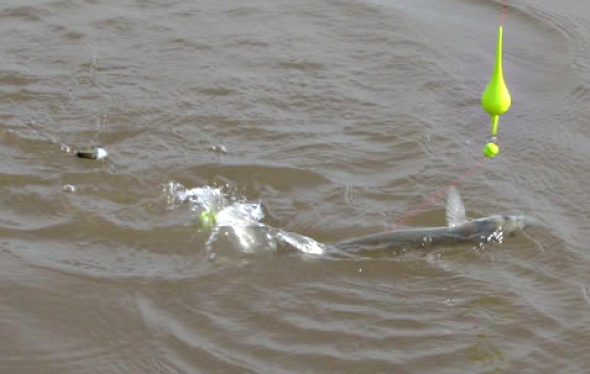 Cada vez más municipios habilitan la pesca de cercanía y con protocolos: todos los detalles