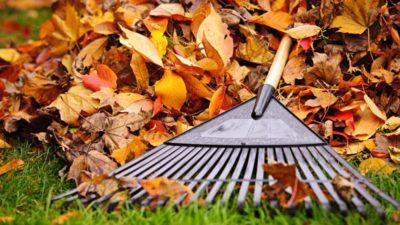 Llegó el otoño y el OPDS te dice qué hacer con las hojas secas