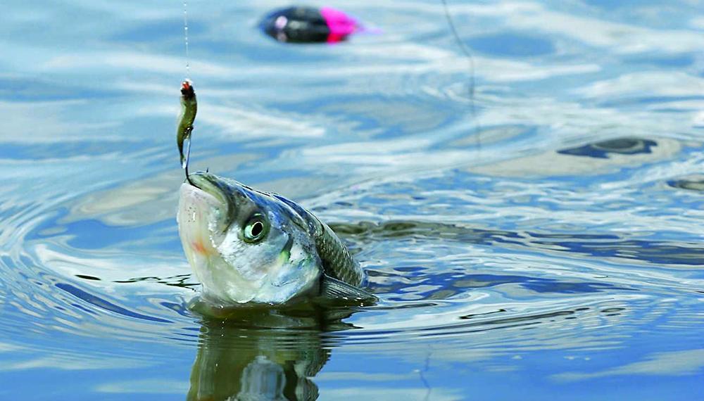 La Industria del Aire Libre pide que se habilite la pesca recreativa en lugares de cercanía