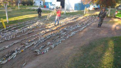 Pesca clandestina en plena cuarentena: encontraron 500 metros de red con mil kilos de pejerrey en Trenque Lauquen
